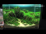 The Art of the Planted Aquarium 2015 - Dennerle Scaper's Tank (Nano) compilation pt.1