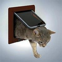 Межкомнатная дверь с дверцей для кошки