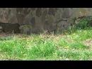 У Франківську через недбальство комунальників біля дитячого майданчика повзають щурі