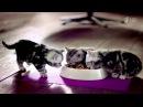 Реклама Whiskas   Вискас для котят 2015