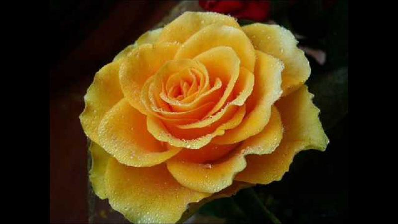 Розы скачать mp3