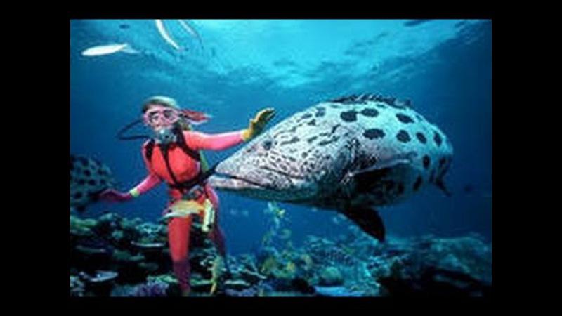 Подводная охота . АВСТРАЛИЯ SPEARFISHING