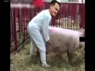 Секс видео со свиньей
