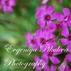 Evgeniya Pikulyova Photography