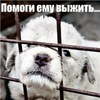 Помоги приютам,сдавая макулатуру (Москва, МО)