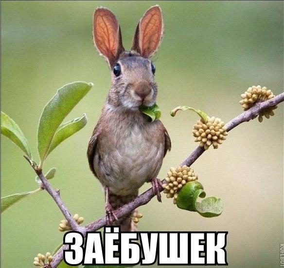 http://cs623421.vk.me/v623421700/3d0c5/HVN0Xkp53dY.jpg