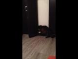 Кот открывает дверь кровати!