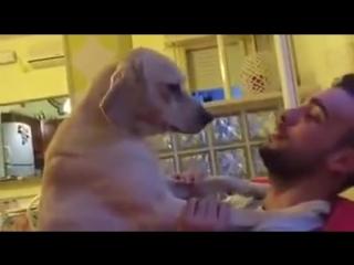 Пес просит прощения