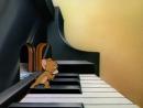 Том и Джерри - Лист Венгерская рапсодия 2