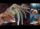 Reef Life of the Andaman full marine biology documentary