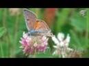 Красивое видео для релаксации. Цветы и бабочки!