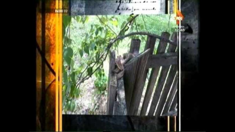Спасатели обезвредили змею в одном из дворов Биробиджана