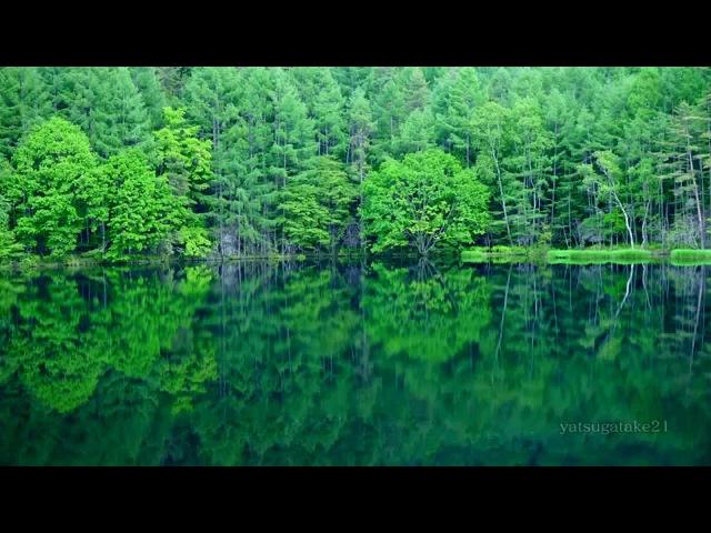 Japan Mishaka pond of summer / 新緑の御射鹿池「死ぬまでに行きたい!日本の絶景」Downconvert 4k shot video by 2k