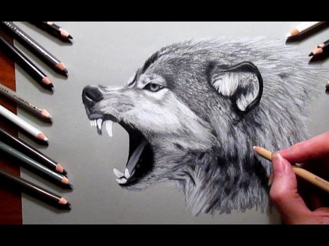 How to Draw a Wolf Pencil drawing | Jasmina Susak Speed drawing of a wolf