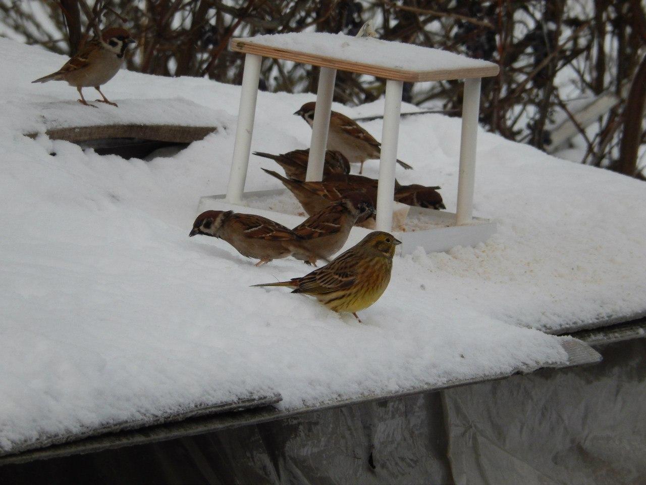 Считайте птиц внимательно! Фото - О.Почепко