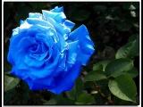 Planet Funk - Rosa Blu (Lee Cabrera Mix)