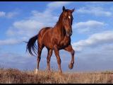 Александр Гусар и Леджер - Чёрная лошадка (СО СТРИМА)