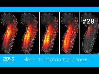 #28 Новости аватар-технологий / Робот-аватар HERMES, видео ЦНС дрозофилы, эксперимент с ДНК мыши