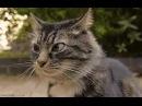 Cat Ping Pong