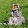 Lemurov.net