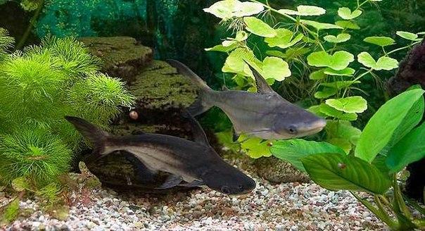 Спасите Помогите, Мор В Акве! - Болезни рыб - Форум