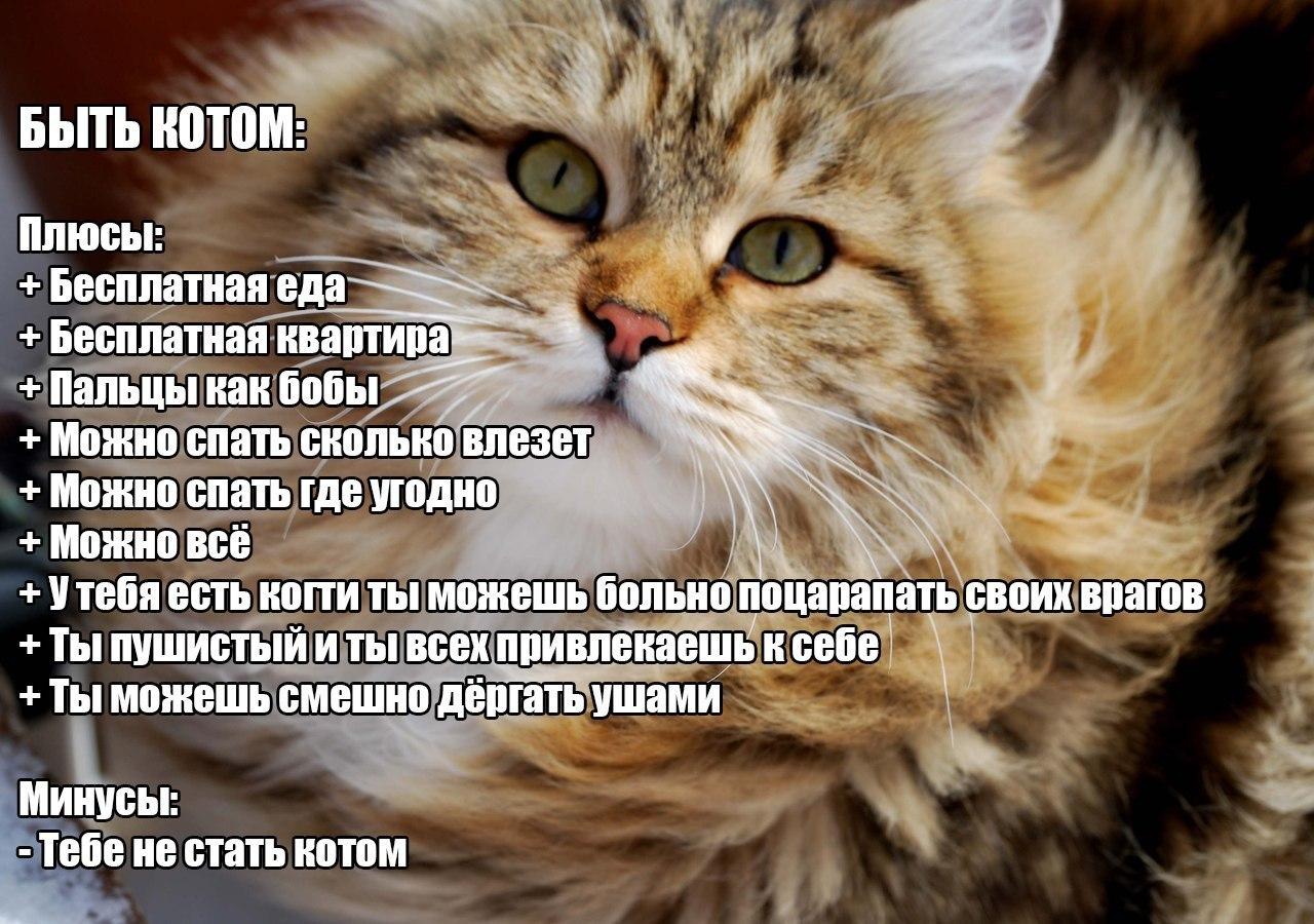 Без кота и жизнь не та цитаты