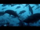 Тайны Тихого океана(6 серия)