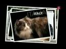 дослідження науки про котів