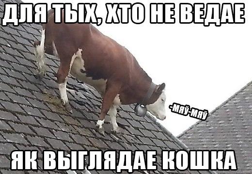 http://cs623425.vk.me/v623425267/386f5/RQTMuGjY_dY.jpg