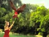 Ocelot feat Irina Mikhailova - Durme