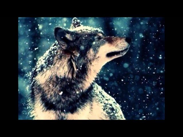 Т.Тишинская Волчица
