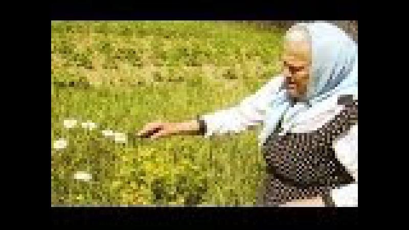 Фильм 1 (из 8). Полный цикл бесед О ЛЕЧЕНИИ ТРАВАМИ. Е.Ф. Зайцева