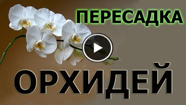 Фильм зимняя вишня вторая серия смотреть онлайн