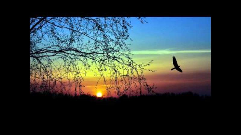 Звуки природы. Вечер в лесу