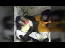 Monkey Consoling Its Sad Friend Heartbreaking Video FULL