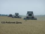 133-Д.(11д.уб-ки яч-я)Возня с трактором Т-150К,сильнейший ливень но мы убираем ячмень