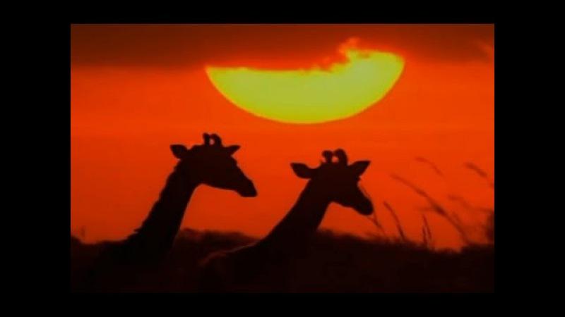 Спокойная музыка для души под музыку Yakuro. Красивые закаты HD video. (Piano, chill mix)