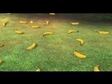 Медведи-соседи (Битва за фрукты)