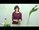 Аспидистра. 7 способов трансформации. Мастер класс практической флористики.