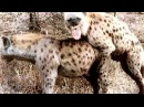 ТОП 10 Ужасные Спаривания Животных в сравнении с Человеком