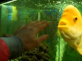 #золотая_рыбка #ребенок #целуются