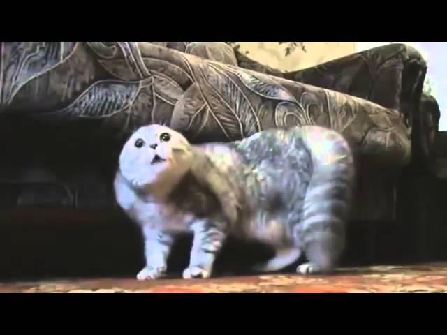 Heavy Metal Cats