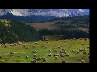 J. S. Bach: Cantata Nº 208, 'Sheep May Safely Graze', BWV 208