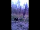 пошли гулять в лес...