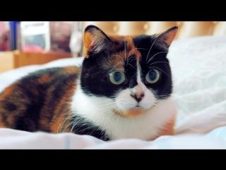 Кошачий автофокус :)