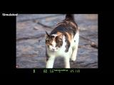 Canon EOS 6D On-Camera Tutorials - Auto Focus System Basics