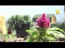 Азы почвоведения. Классификация почв, удобрения, кислотность FORUMHOUSE