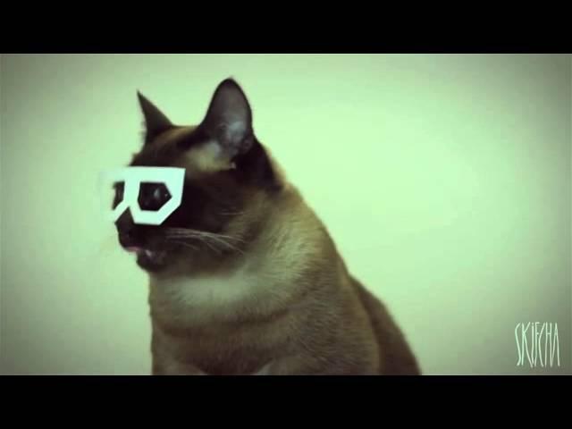 Dubstep Cat (stereo skifcha) » Freewka.com - Смотреть онлайн в хорощем качестве