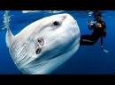 Самые Странные в Мире Животные . Чудаки в Океане ( Документальный Фильм National Geographic )