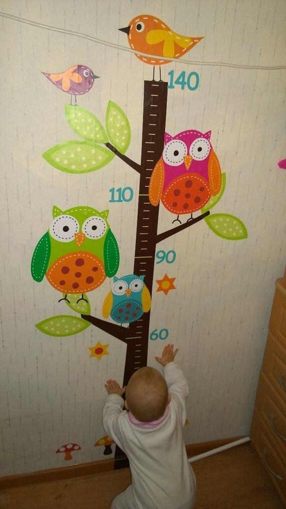 фото совы наклейка, фото совы ростомер, фото лес совы